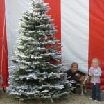 Flocked Tree at Christmas Tree Lot