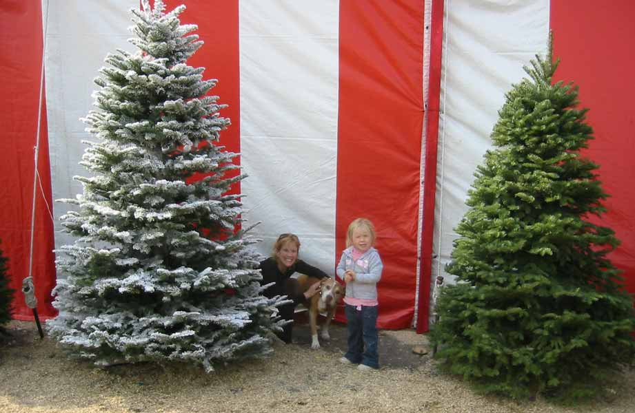 Flocked Christmas tree at lot in Van Nuys